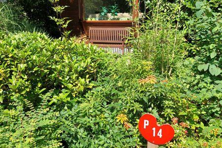 natuurplekje P14 op Bospark Dennenrhode Doornspijk